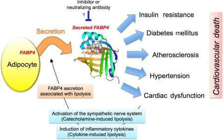 fatty acid2